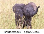 Stock photo close up of a elephant calf playing in the grass 650230258