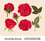 set of red rose | Shutterstock .eps vector #650300038