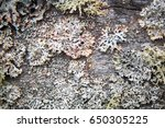 moss and mold on an old wooden... | Shutterstock . vector #650305225