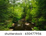 a creek in a lush forest  at... | Shutterstock . vector #650477956