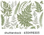 set with leaves. ferns.  vector ... | Shutterstock .eps vector #650498305
