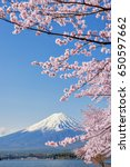 fuji mountain and pink sakura... | Shutterstock . vector #650597662