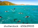 dolphin group jumping swimming... | Shutterstock . vector #650639035