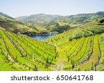 douro valley. vineyards and... | Shutterstock . vector #650641768