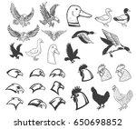 Set Of Birds Illustrations....