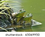 Two Frogs Sit Side By Side By ...