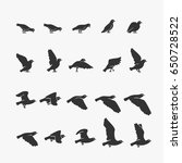 Animation Dove Flying Vector...