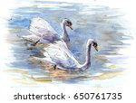 Couple Of Swans On The Water....