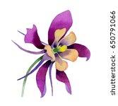 wildflower orchid flower in a... | Shutterstock . vector #650791066
