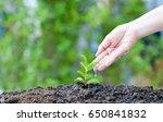 seed and planting concepts by... | Shutterstock . vector #650841832