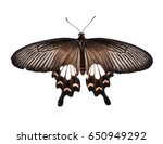 Stock photo red exotic butterfly isolated on white background 650949292