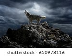 Small photo of A lone wolf sings his song on top at night