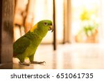 Parrot Walking In The Ground O...