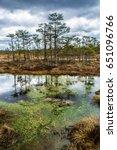 breath of the swamp. beautiful...   Shutterstock . vector #651096766