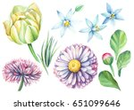 set of tulips and daisies... | Shutterstock . vector #651099646