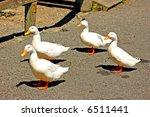 Four Peking Ducks