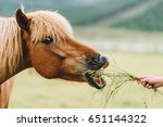 Stock photo horse profile horse portrait 651144322