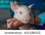 cute piglet portrait on hands... | Shutterstock . vector #651188152
