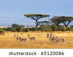 african landscape with gazelles ... | Shutterstock . vector #65120086