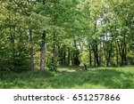deciduous forest. forest trail... | Shutterstock . vector #651257866