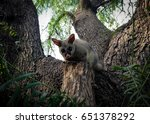 Little Australian Possum On Th...