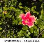 carmine  pink suffused with...   Shutterstock . vector #651381166