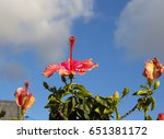 carmine  pink suffused with...   Shutterstock . vector #651381172