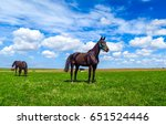 Horse In Summer Field Landscape
