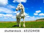 white horse stallion portrait... | Shutterstock . vector #651524458