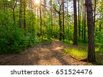 Sunset Forest Trees Sunlight I...