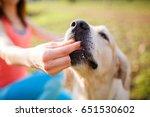 woman giving treat labrador dog | Shutterstock . vector #651530602