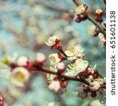 spring blossom   Shutterstock . vector #651601138