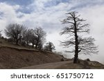 Small photo of landscape lone tree, Of the Abr Jungle of Shahrood Iran