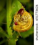 Small photo of Dermaptera