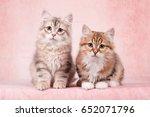 Stock photo siberian kitten 652071796