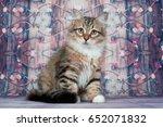 Stock photo siberian kitten 652071832