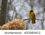 Small photo of The village weaver from Africa.