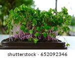 fresh micro greens  group of... | Shutterstock . vector #652092346