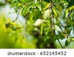 new harvest of almonds  almonds ... | Shutterstock . vector #652145452