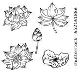 hand drawn lotus flower isolate ... | Shutterstock .eps vector #652161886