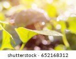 nature concept. close up spring ... | Shutterstock . vector #652168312