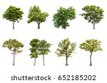 isolated tree on white... | Shutterstock . vector #652185202