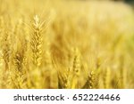 ears of wheat | Shutterstock . vector #652224466