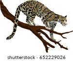 vector clouded leopard ... | Shutterstock .eps vector #652229026