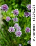 Small photo of Allium Schoenoprasum onion with purple flower is a decorative and growing outdoors