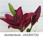 Dark Red Lily