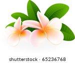 frangipani | Shutterstock .eps vector #65236768