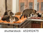 many cats together indoors... | Shutterstock . vector #652452475