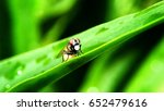 macro photography an insect on... | Shutterstock . vector #652479616