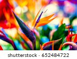 Bird Of Paradise Flowers In...